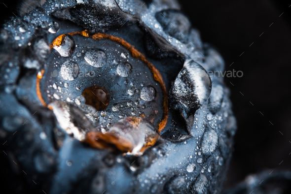 One blueberry covered with water drops isolated on black background. Very detailed macro shoot - Stock Photo - Images