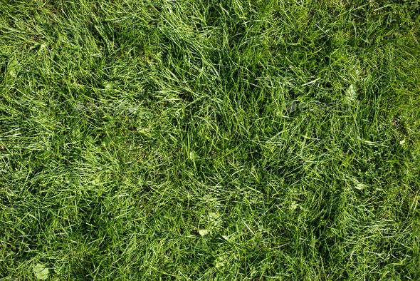Green grass garden background texture pattern - Stock Photo - Images