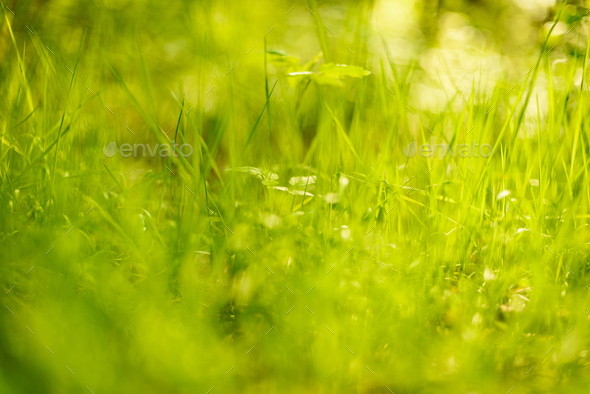 Grass back lit by summer sun - Stock Photo - Images