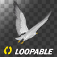 Sea Gull - Flying Loop - Back Side View - VideoHive Item for Sale