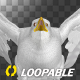 Sea Gull - Flying Loop - Front View - VideoHive Item for Sale