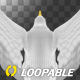 Sea Gull - Flying Loop - Back Top View - VideoHive Item for Sale