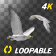Sea Gulls - Two Birds - Flying Around - 4K Transparent Loop - VideoHive Item for Sale
