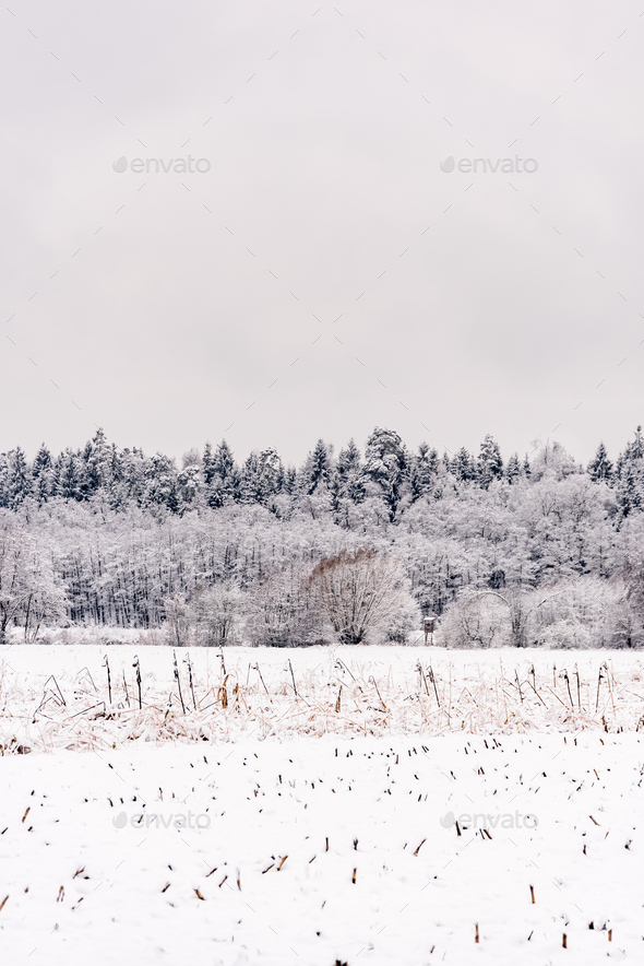 White winter landscape forest and fields countryside - Stock Photo - Images