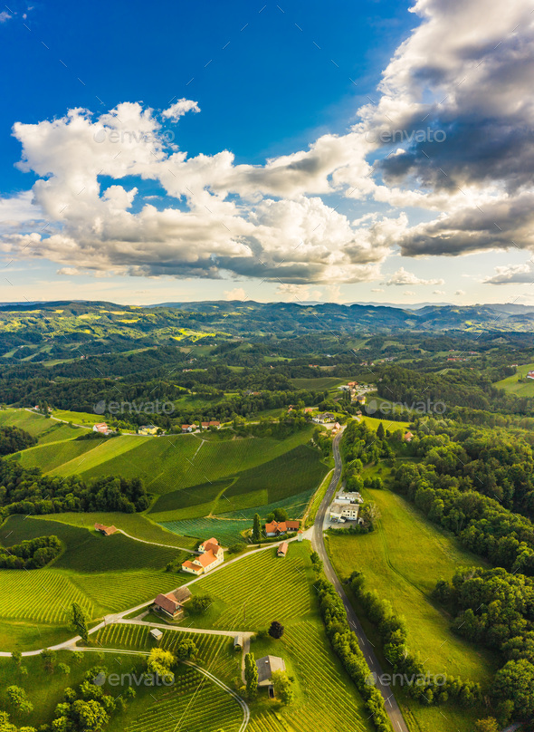 South styria vineyards aerial panorama landscape. Grape hills view from wine street in summer - Stock Photo - Images