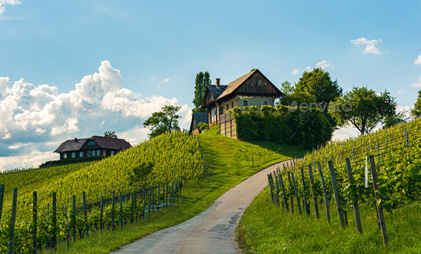 Beautiful landscape of Austrian vineyards in south Styria. Famous Tuscany like place to visit - Stock Photo - Images