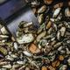 Cooking a Vegan Dish - PhotoDune Item for Sale