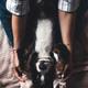 little puppy of bernese mountain dog on hands of fashionable girl with a nice manicure. animals - PhotoDune Item for Sale