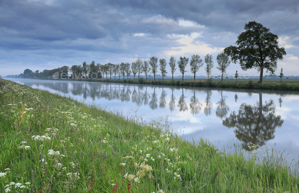 tree row reflected in quiet river in dusk - Stock Photo - Images