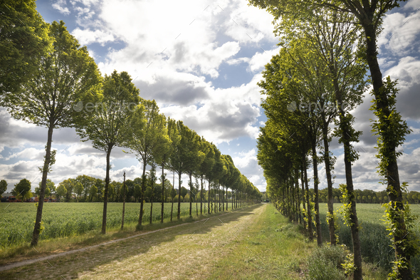 tree rows in sunshine - Stock Photo - Images