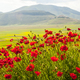 Landscape of Piano di Castelluccio - PhotoDune Item for Sale