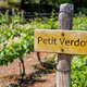 PETIT VERDOT Wine sign on vineyard. Vineyard landcape - PhotoDune Item for Sale