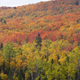 Northern Minnesota hillside ablaze with aspen, birch and maple trees in fall color - PhotoDune Item for Sale