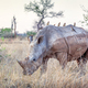 A White Rhino in Kruger Park - PhotoDune Item for Sale