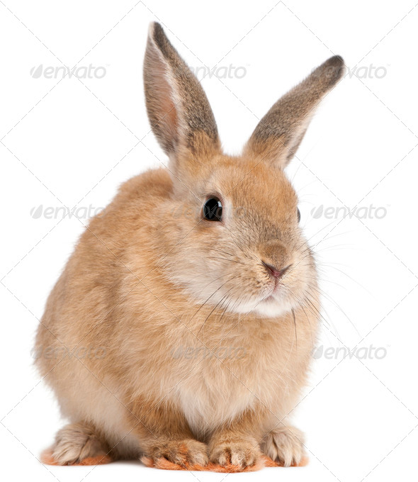 Bunny rabbit in front of white background - Stock Photo - Images