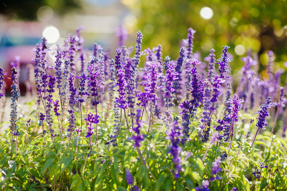blue wildflowers in summer - Stock Photo - Images