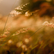 sunset grass and wildflowers - PhotoDune Item for Sale