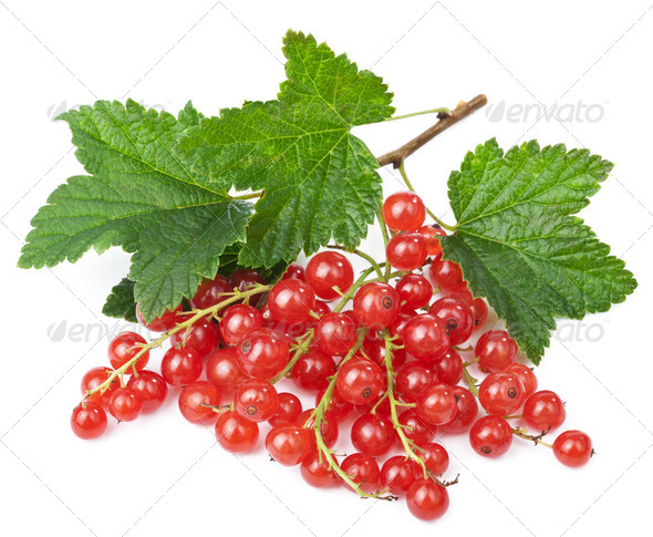 fresh red currant isolated - Stock Photo - Images