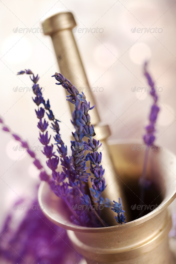 mortar with lavender - Stock Photo - Images