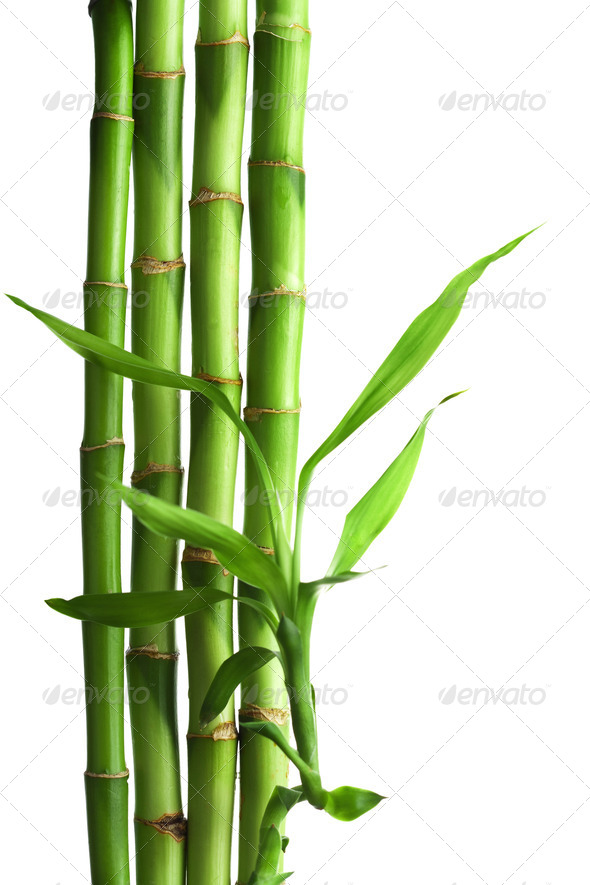 bamboo isolated - Stock Photo - Images