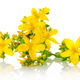 St Johns wort - PhotoDune Item for Sale
