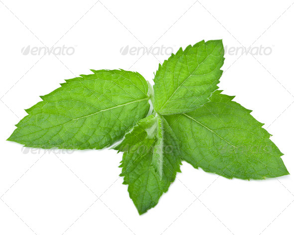 fresh mint leaf isolated - Stock Photo - Images