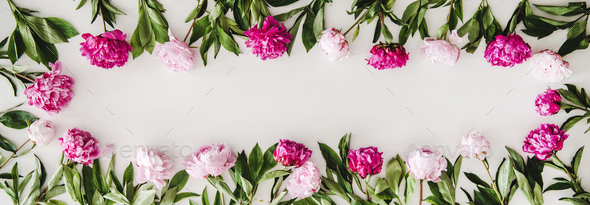 Summer peonies flowers layout on plain white background, copy space - Stock Photo - Images