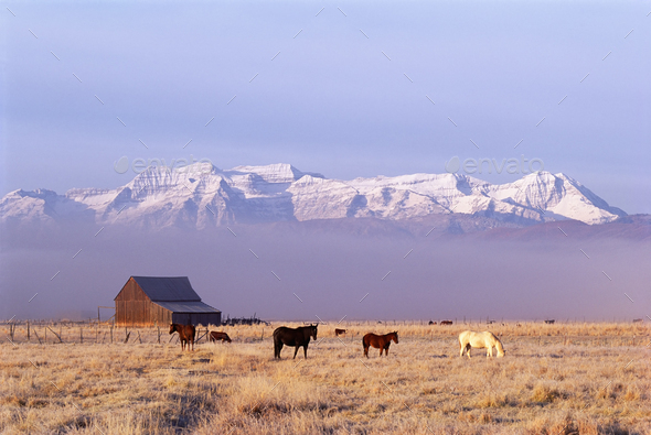 A small group of horses grazing in a valley by snowcapped mountain range - Stock Photo - Images