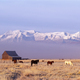 A small group of horses grazing in a valley by snowcapped mountain range - PhotoDune Item for Sale