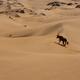 Gemsbok, Namib Desert, Namibia - PhotoDune Item for Sale