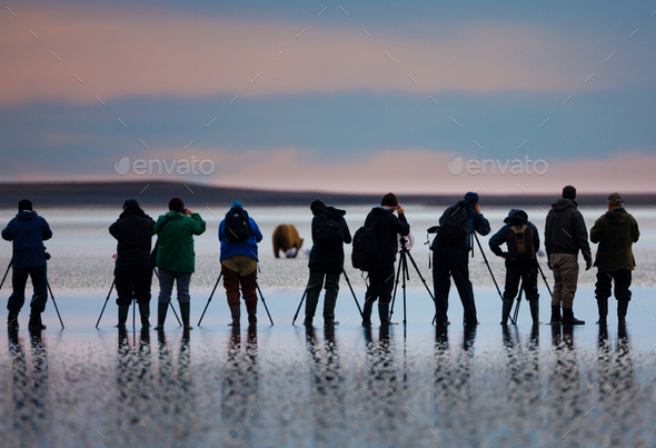Photographers, brown bear, Lake Clark National Park, Alaska, USA, Ursus arctos, - Stock Photo - Images