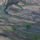 Terraced rice fields, Yuanyang, China - PhotoDune Item for Sale