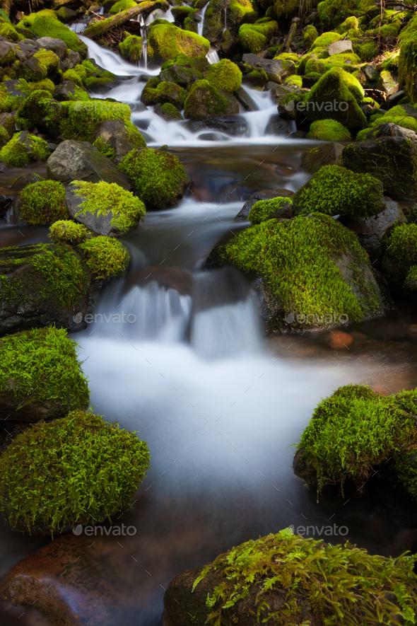 Rainforest stream, Olympic National Park, Washington - Stock Photo - Images