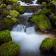 Rainforest stream, Olympic National Park, Washington - PhotoDune Item for Sale