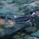 Gentoo penguin swimming in the sea, Antarctica - PhotoDune Item for Sale