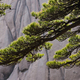 Huang Shan landscape, China - PhotoDune Item for Sale