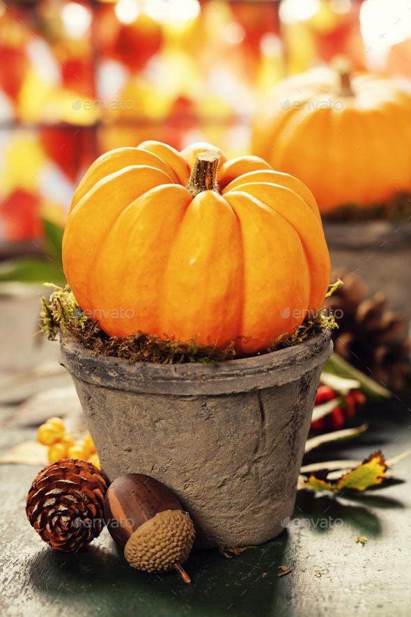 Tiny pumpkins in flower pots on old table, close up - Stock Photo - Images