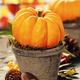 Tiny pumpkins in flower pots on old table, close up - PhotoDune Item for Sale