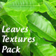 High Quality Leaves textures - GraphicRiver Item for Sale