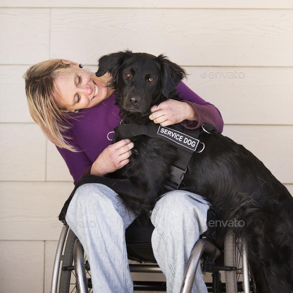 A wheelchair user with her service assistance dog, a black labrador whose front paws are on her lap. - Stock Photo - Images