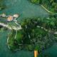 Aerial view of lotus plants in park - PhotoDune Item for Sale