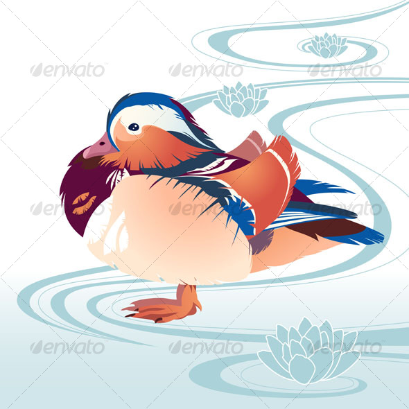 Colorful exotic bird - Animals Characters