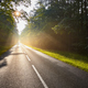 Wet asphalt road in forest against the sun. - PhotoDune Item for Sale