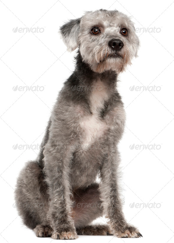 Mixed-breed (1 year old) - Stock Photo - Images