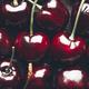 Macro of Fresh cherries - PhotoDune Item for Sale