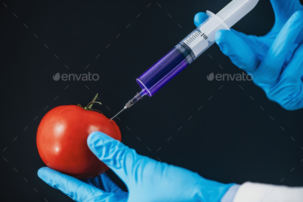 Genetically Engineered Food Concept. Injecting Chemicals into Tomato - Stock Photo - Images