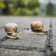 Two snails in garden - PhotoDune Item for Sale