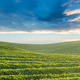 tea garden in the early morning sunlight - PhotoDune Item for Sale