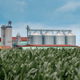 Grain storage silos in cultivated corn maize field - PhotoDune Item for Sale