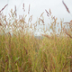 Texture of wild grass against the sky - PhotoDune Item for Sale